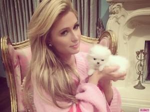 Paris Hilton publikon videoklipin e ri