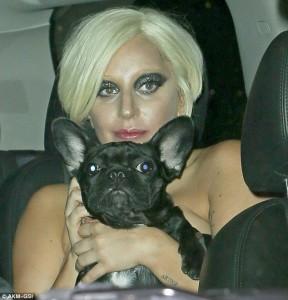 Gaga me linjë veshjesh për qentë